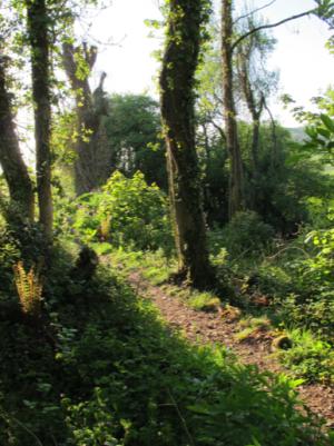 Rowdon Path