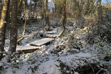 Rowdon Winter
